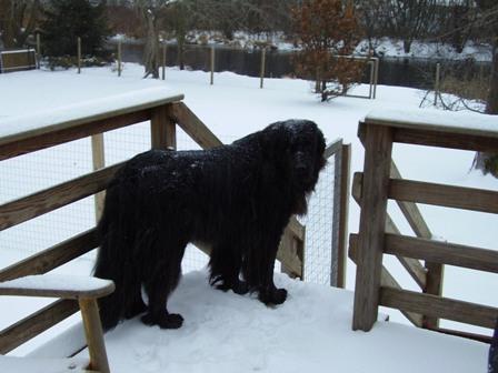 kodiak-snow-3.jpg